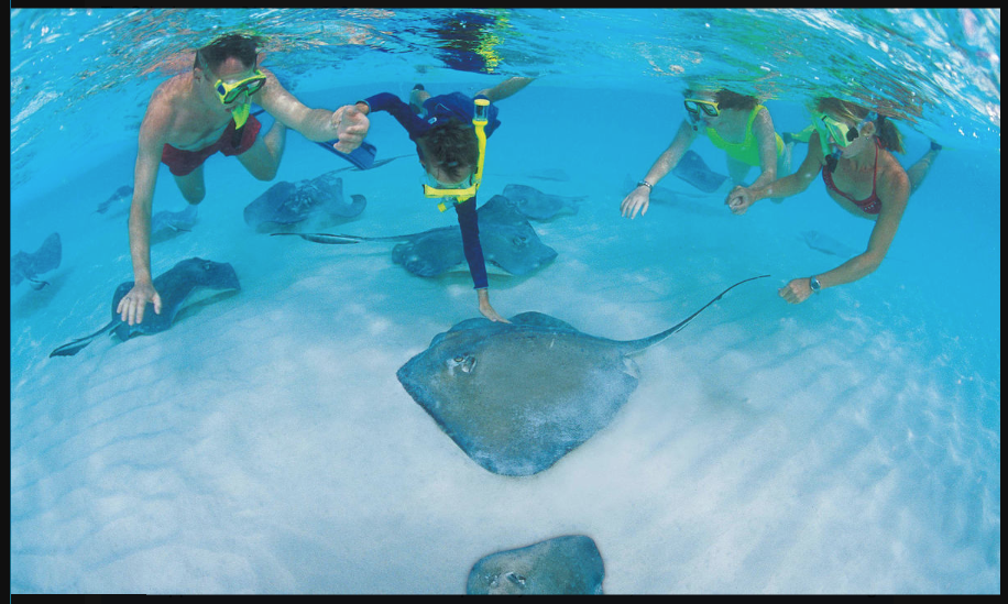 Explore The Beauty Of Caribbean: Snorkeling In Caymans: Explore Beautiful Coral Reefs Of