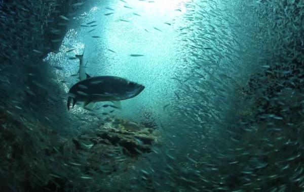 Scuba Diving Destinations Caymans