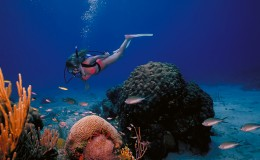 Best Scuba Destinations Caymans