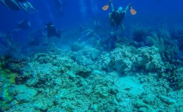 Scuba Destinations Caymans