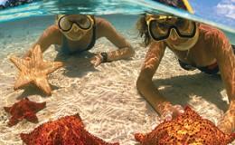 Starfish Snorkelers