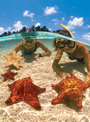 Star fish point grand caymans for Grand cayman fishing