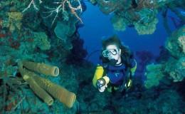bats cave reef