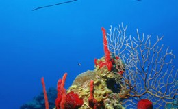 diving-reef-e3-300