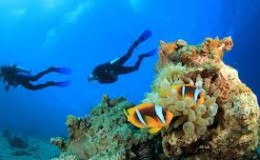 Coral Gardens Snorkeling Cayman Islands