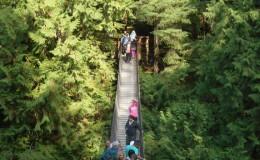 lynn bridge