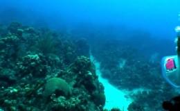 Coral Gardens Snorkeling