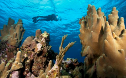 Snorkeling the reefs of Coral Gardens